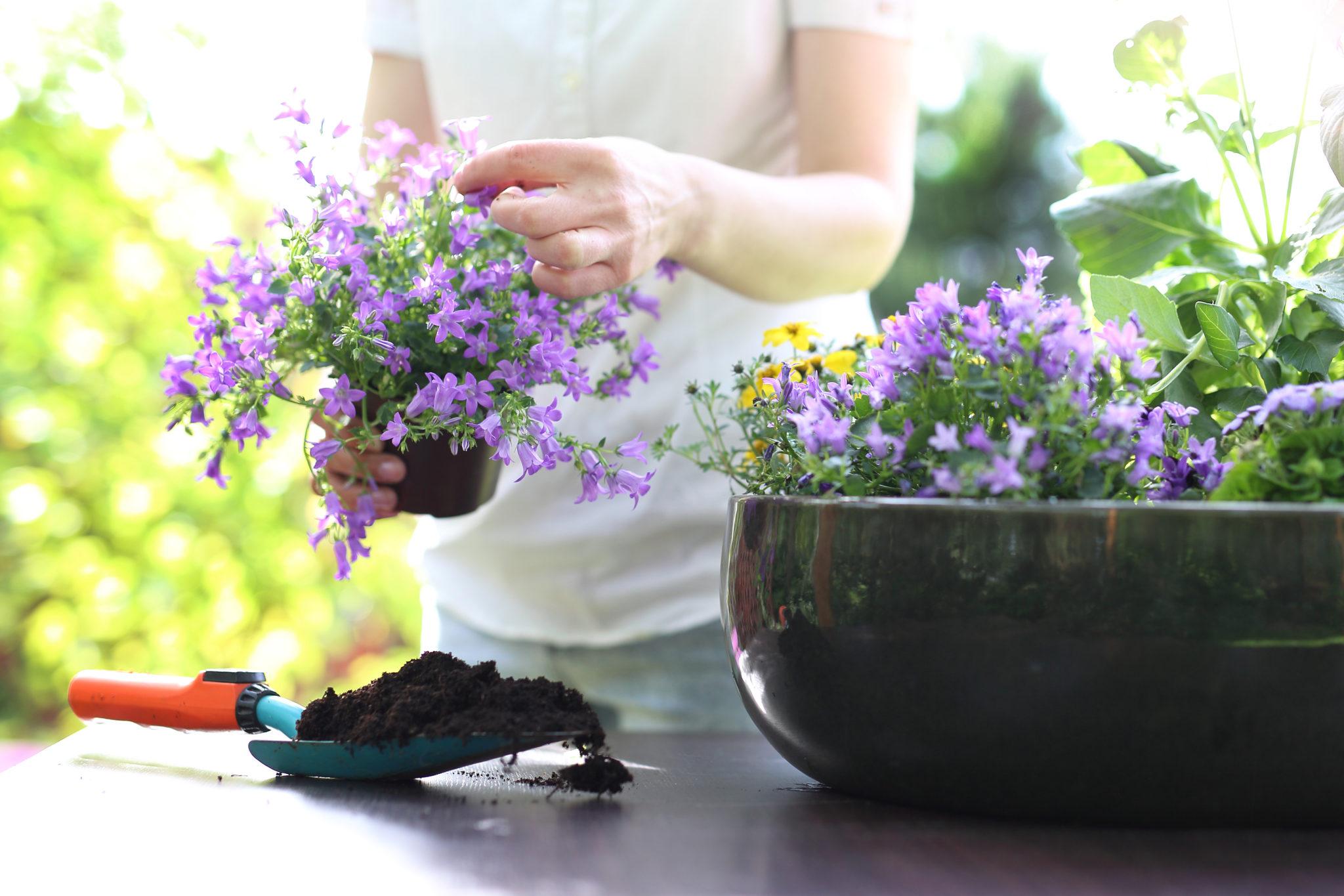 essential oils for arthritis relief
