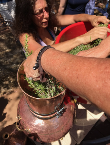 Putting rosemary into the distiller